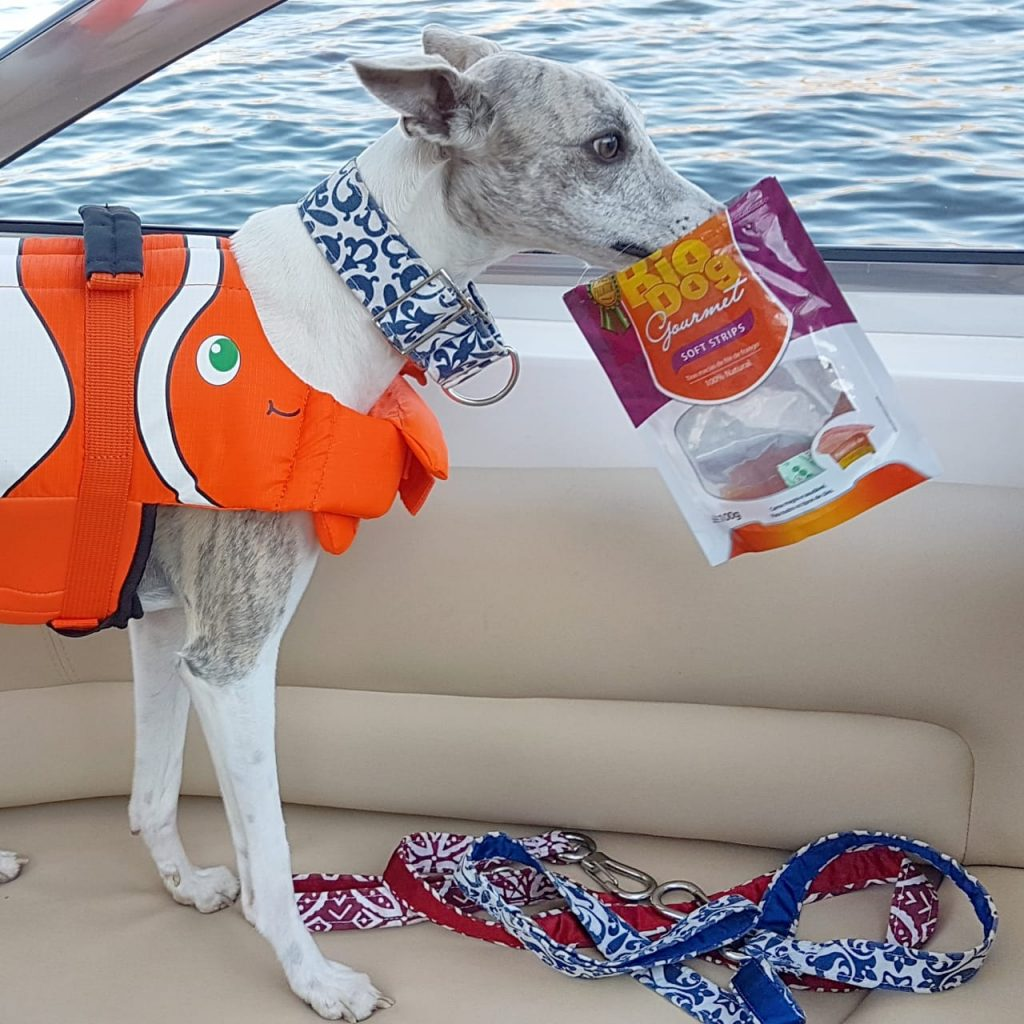 navegar com cachorros